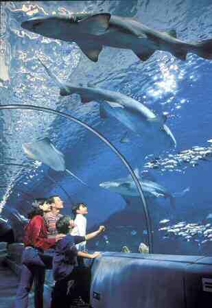 Marineland rencontre requin